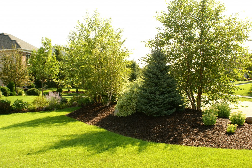 berm landscaping photo - 5