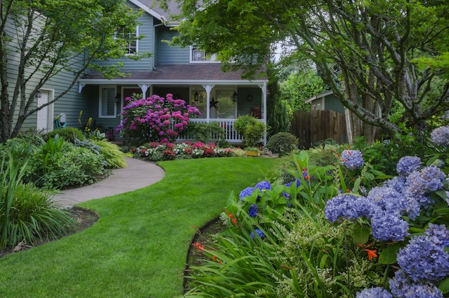 cheap landscaping plants photo - 4