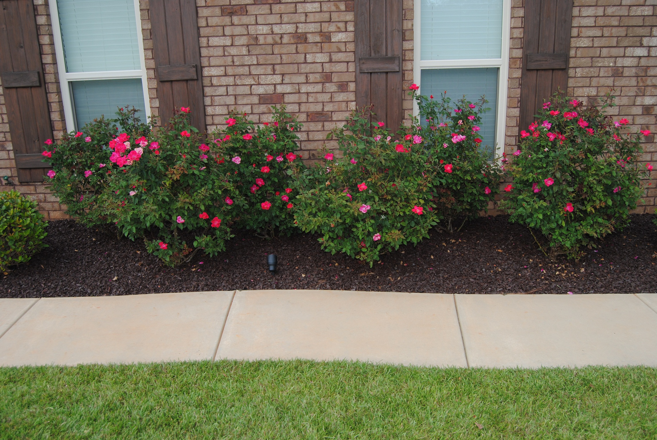 dark mulch landscaping photo - 2