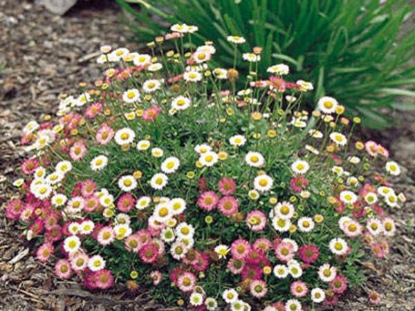 perennial landscaping photo - 17