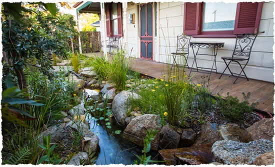 water wise landscaping photo - 20